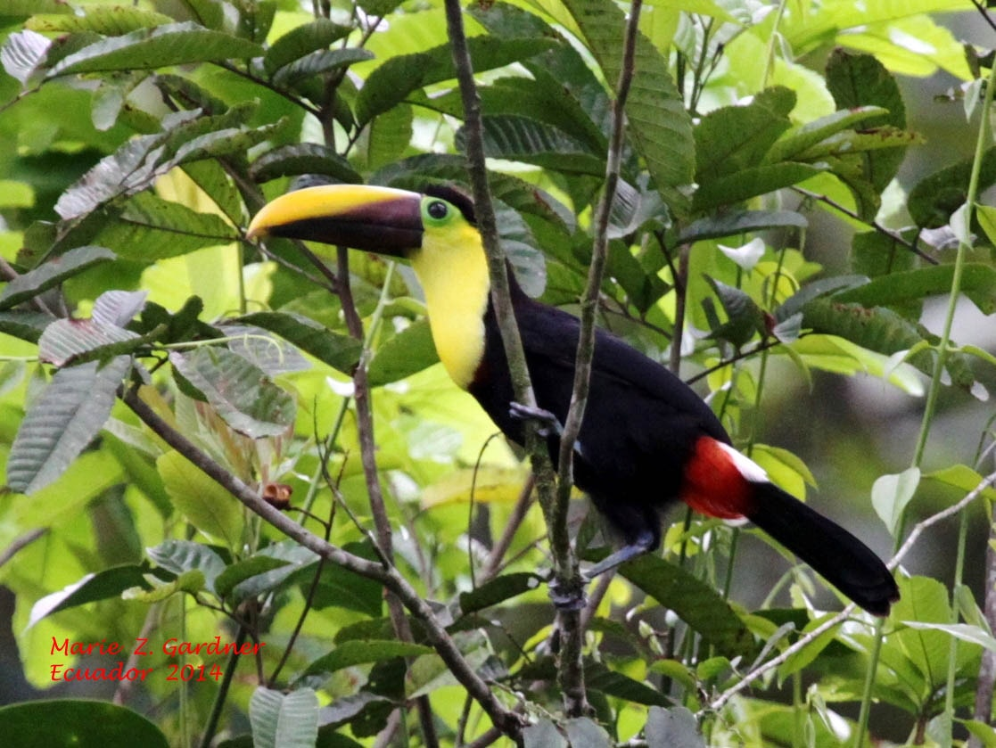 Birding Tours Ecuador