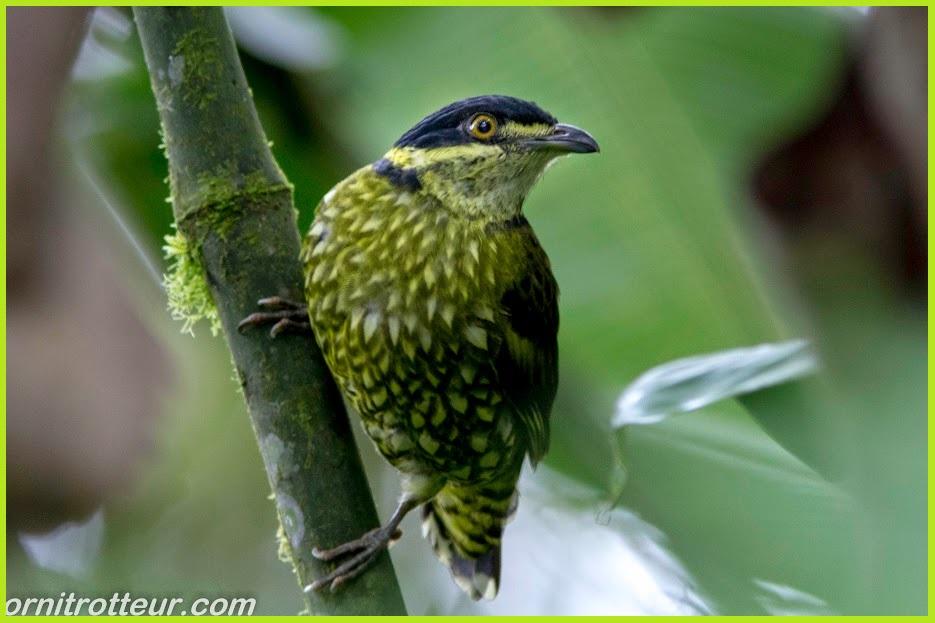 Podocarpus National Park Tours