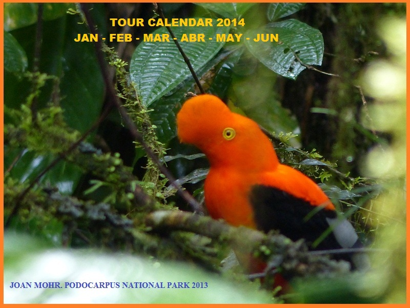 BIRDWATCHING TOURS ECUADOR