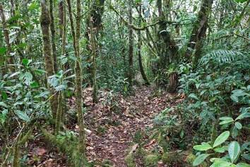 forest trail_mg_8805 jm formenti-lr.jpg