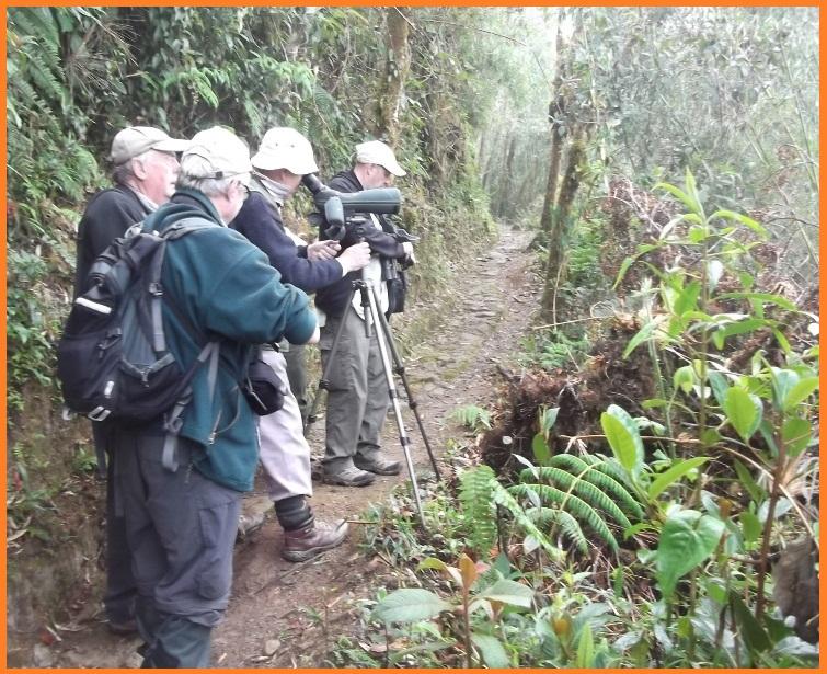 Birding Tours Ecuador.