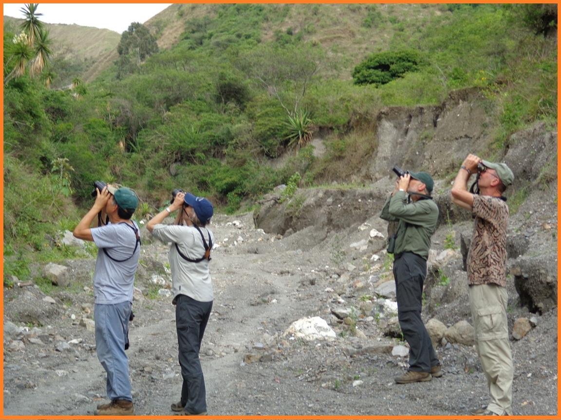 Birding Tours in Ecuador
