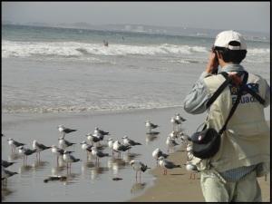 Birding Tours Ecuador Coast.