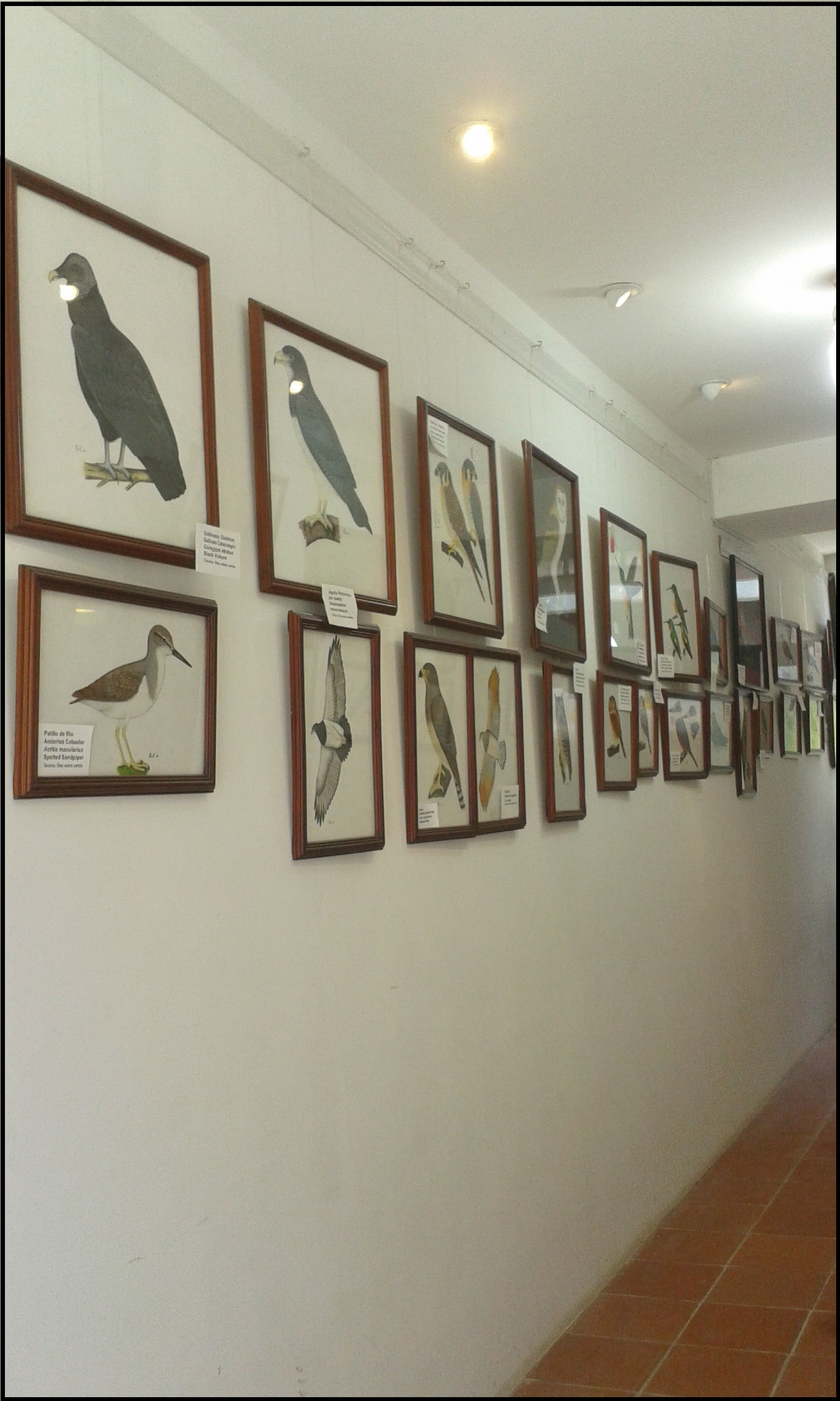 BIRDS IN ART LOJA ECUADOR